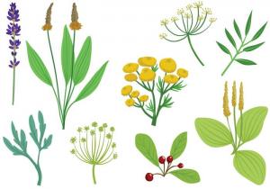 Vaistiniai augalai